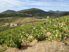 Kampagne Frankrig Languedoc